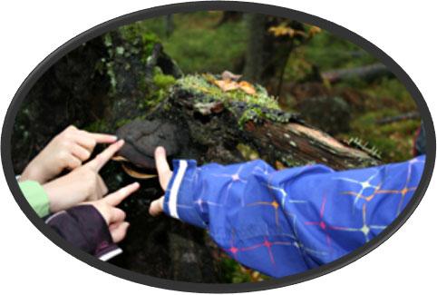 Vuosi metsässä -koulutus